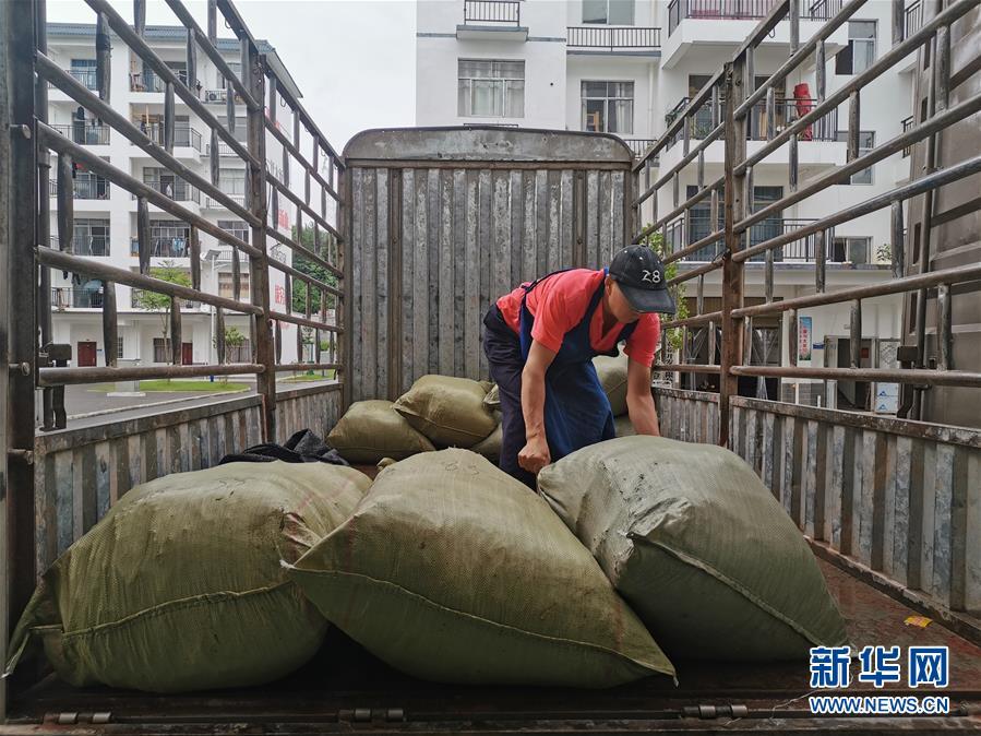 """小小粽叶成为武陵山区群众的""""幸福叶""""-广西新闻网图片"""