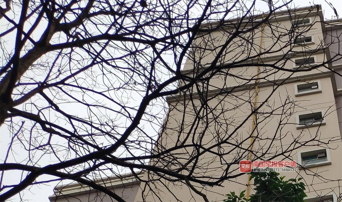 广西启动重大气象灾害(寒冷)Ⅲ级应急响应命令