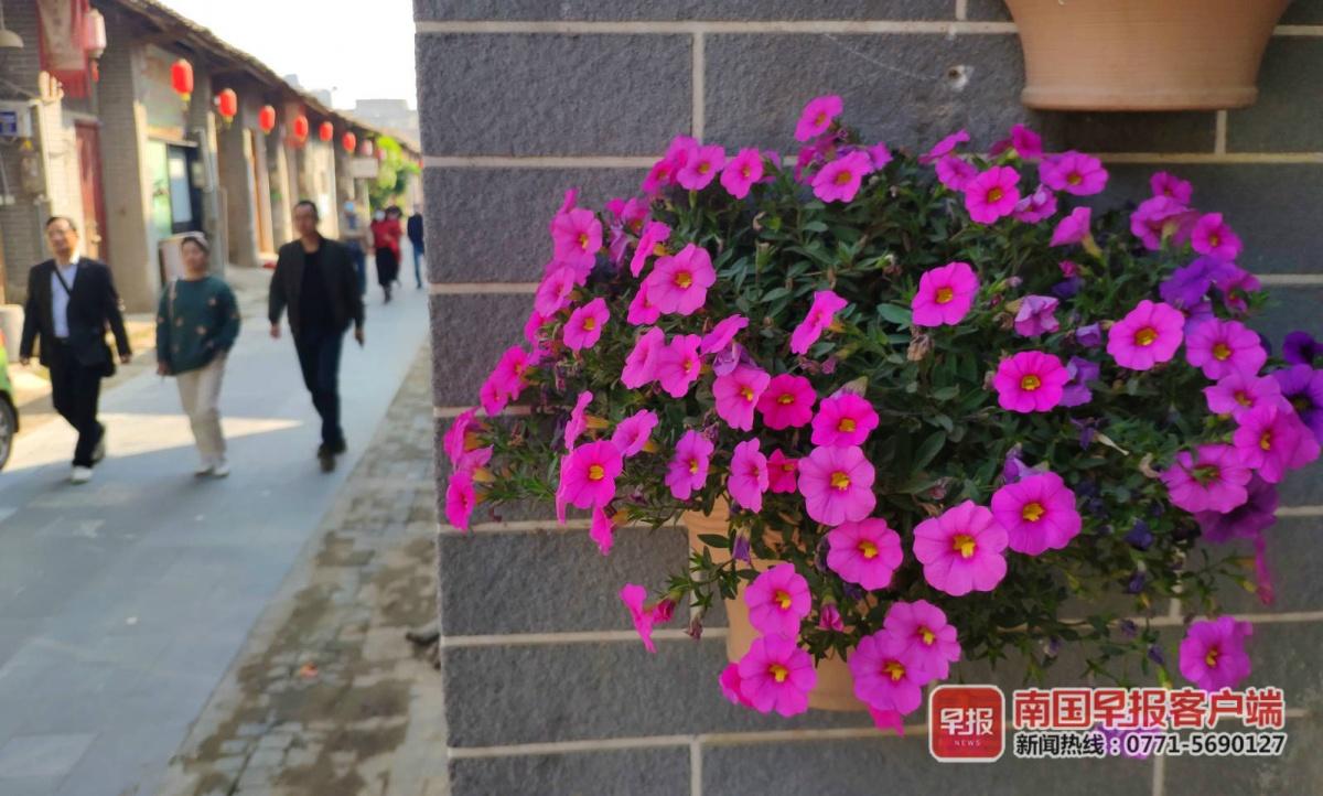 留在宾阳过年也有趣,赏花逛街欢喜过大年