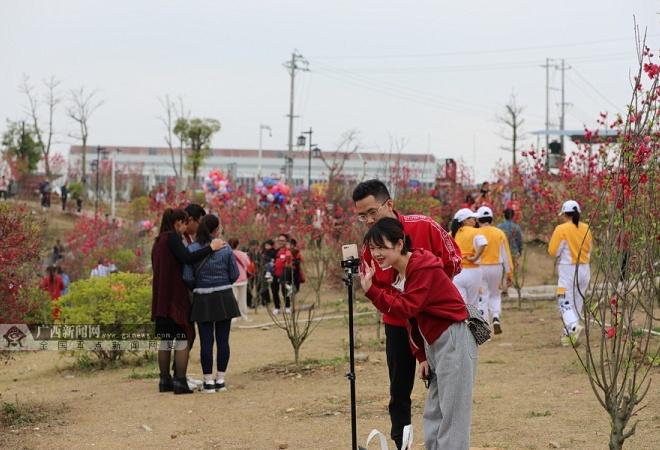 赏桃花 唱山歌 品美食…… 大化春节旅游人气爆棚