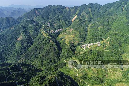 东兰:发展林业特色产业 助力老区脱贫攻坚