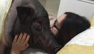 姑娘搂着170斤猪睡