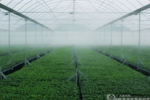 【高清】百色田阳:谱写不一样的农业新篇章