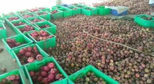 邕宁区:金秋十月 产业丰收喜人