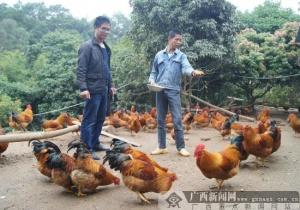 灵山:旺屋村有了脱贫产业