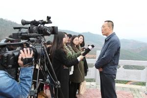 右江区发挥芒果产业示范引领作用