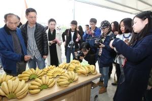 田东县林逢镇:扶贫引导基金助力产业扶贫