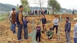 上林县知识产权局组织村干部外出参观学习稻田综合生态种养经验