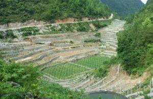 蹲点记者到访河池南丹县懂甲村:石头缝里抠出百香果基地