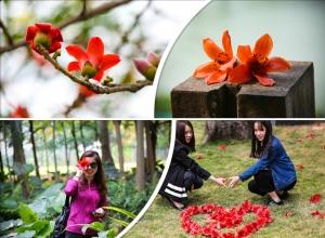 高清组图:邕城木棉红似火 恰到春来展俏颜