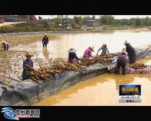 河东村:引进特色产业 拓宽增收渠道