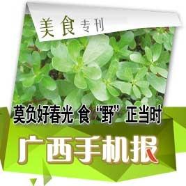 【美食专刊】初春吃荠菜有助降低血压