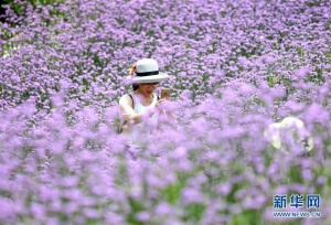 广西南宁:花开引客来