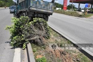 司机避让变道大货车猛打方向 拖拉机失控冲入花带