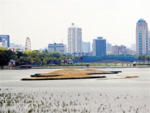 南宁南湖公园四个生态岛雏形初显 你期待吗?(图)