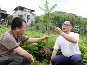 福建洋口林场:深山里的中国杉木种质资源库