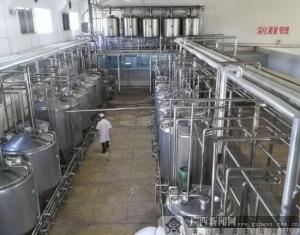 灵山奶水牛存栏4.63万头 人均年收入超2万
