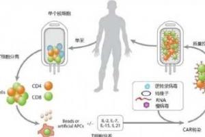 T细胞免疫疗法成功应用于晚期乳癌