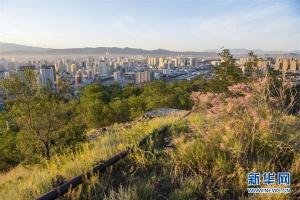 乌鲁木齐:接力播绿 荒山换新颜