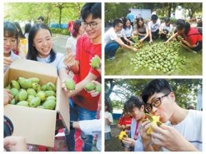 广西大学摘芒果送给毕业生 学生表示心动已久