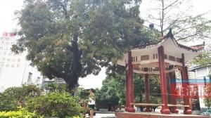 """南宁五中有两棵名树 """"总理树""""见证中柬友谊(图)"""