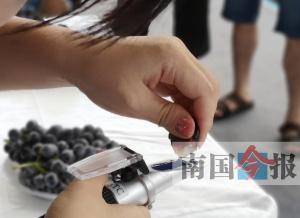 鹿寨县第四届葡萄文化节开幕 果香飘溢醉游人(图)