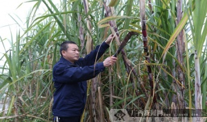 记南宁糖业香山糖厂广西劳动模范黄耿维