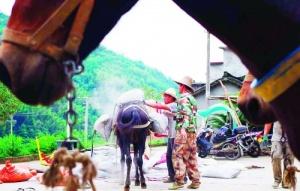 高清组图:临桂瑶乡大山里最后的马帮