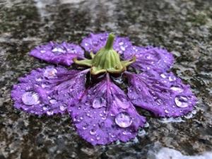 广西启动气象灾害Ⅳ级应急响应 南宁将有强劲雨势