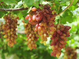 清凉甜爽停不下来 盛夏广西竟有这么多好吃的水果