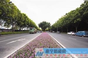 """南宁荔滨大道路缘石提升工程完工 """"颜值""""更高了"""