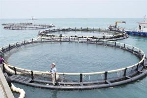 探访铁山港区深海抗风浪养殖示范区