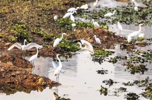 南宁南湖改善工程11月完工 实现水清岸绿鱼游景美