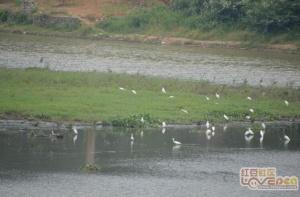 灵东水库,发现生态美