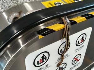 9月20日焦点图:南宁佛子岭地铁站惊现一条长蛇