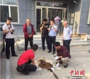 内蒙古男子5万元网购虎皮送礼被抓(图)