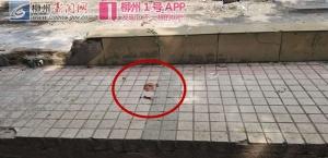 柳州太平中街路口一醉汉与他人起冲突 被斧头砍伤