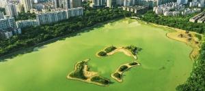 焦点:南宁南湖公园生态鸟岛陆续修筑完成