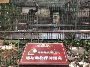 """9月30日焦点图:游客在南宁动物园遭""""猿粪""""袭击"""