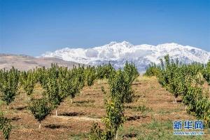 中塔探索农业合作新模式