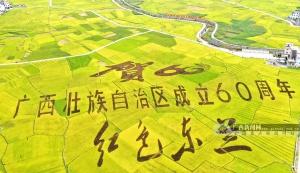 东兰县兰木乡1000多亩的富硒墨米稻田