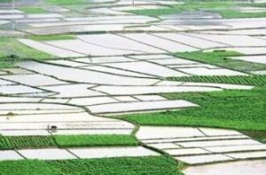 提质升级 广西认定新一批现代特色农业核心示范区