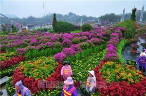 柳州市民广场花卉展26日亮相 酒桶花瀑美到爆!