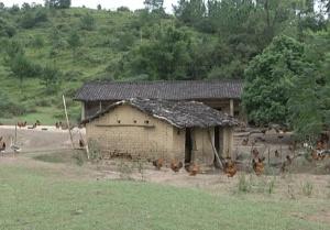 灵山那垌:发展生态土鸡养殖 壮大村级集体经济