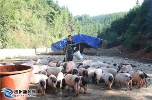 媒体大咖齐聚八步区 助力农民丰收节