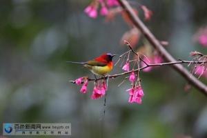 鸟儿的天堂——那坡县德孚自然保护区(组图)
