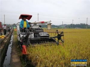 松柏村庆祝首届中国农民丰收节