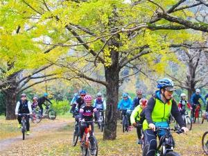 11月18日焦点图:兴安灵川银杏黄叶满枝头