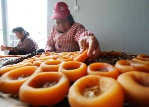 高清组图:广西恭城月柿迎丰收季