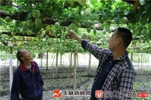 容县寻阳村:合作社引领 拓宽致富路